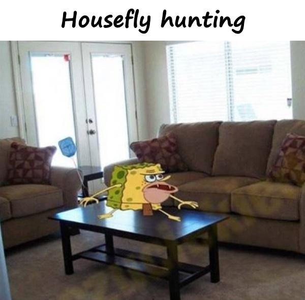 Housefly hunting
