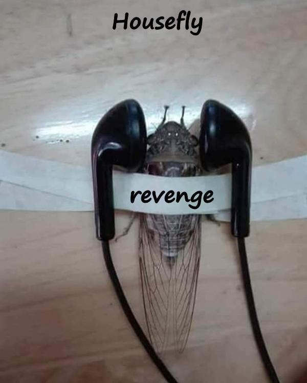 Housefly - revenge