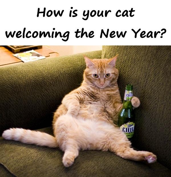 How is your cat welcoming the New Year?