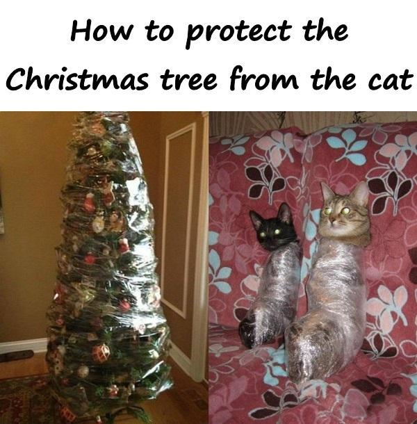 How to protect the Christmas tree from the cat