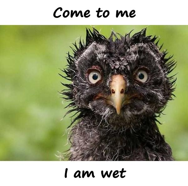 Come to me, i am wet