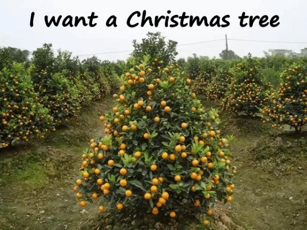 I want a Christmas tree