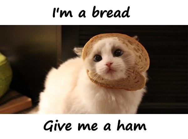 I'm a bread. Give me a ham.