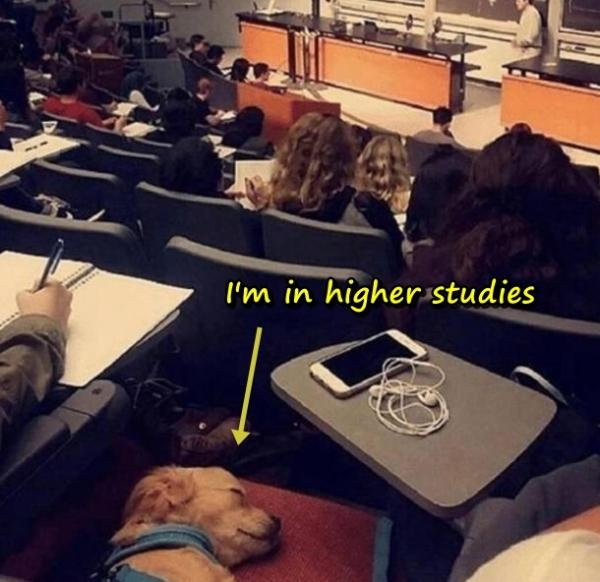 I'm in higher studies