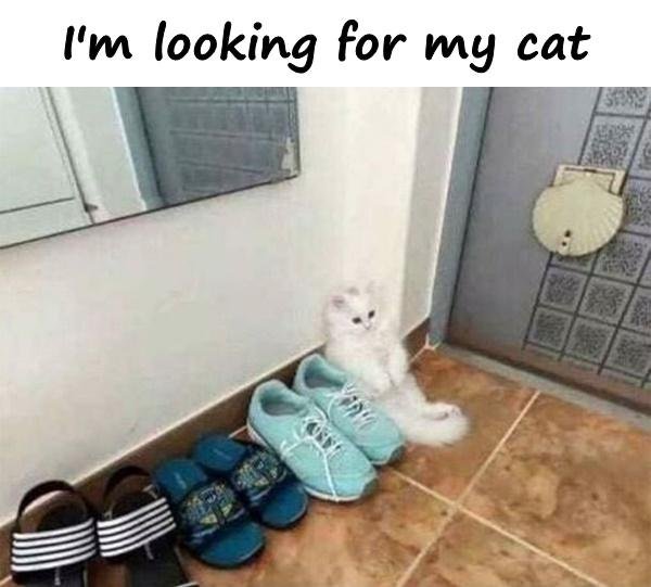 I'm looking for my cat