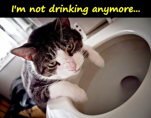 I'm not drinking anymore...
