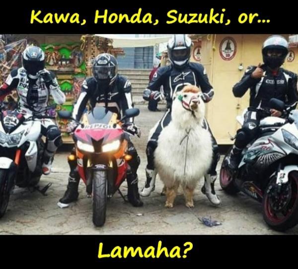 Kawa, Honda, Suzuki, or... Lamaha?