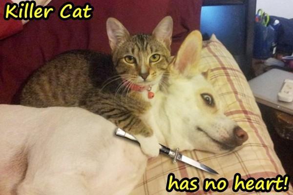Killer Cat has no heart!