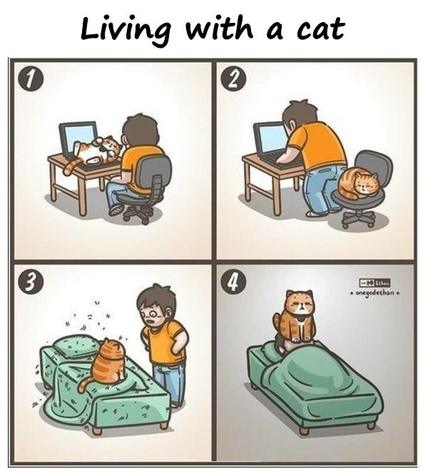 Living with a cat