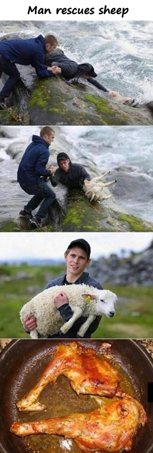 Man rescues sheep
