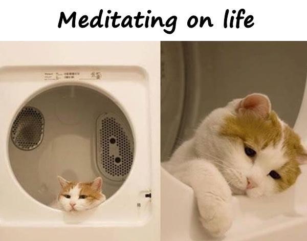 Meditating on life