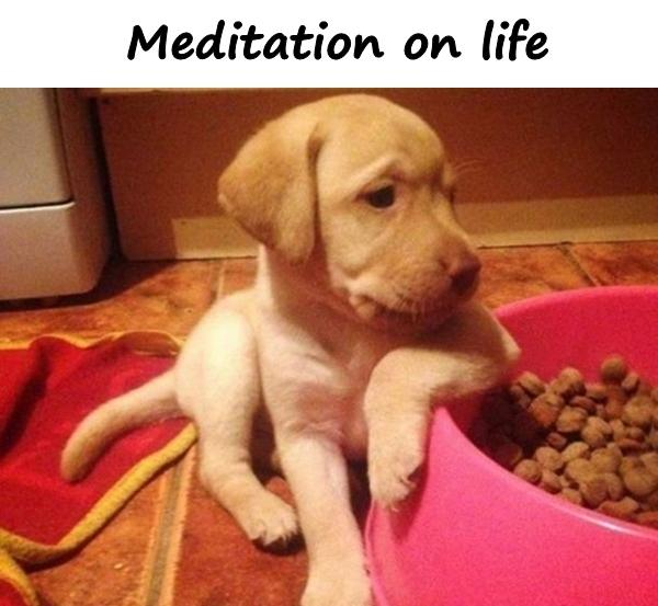 Meditation on life