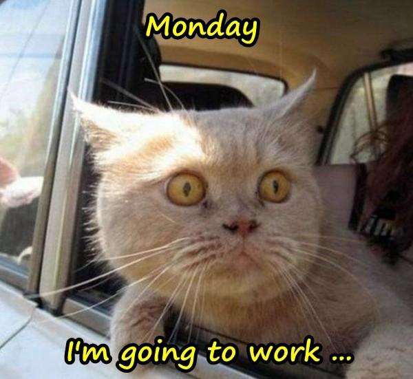 Monday - I'm going to work ...