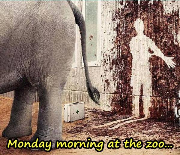Monday morning at the zoo...
