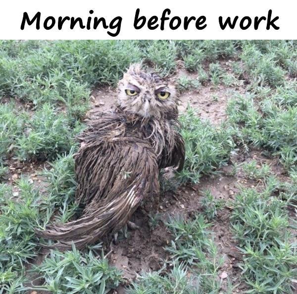 Morning before work