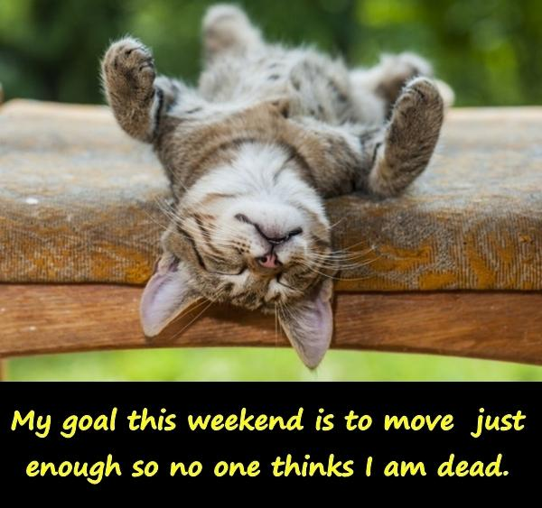 My goal this weekend is to move just enough so no one thinks I am dead.