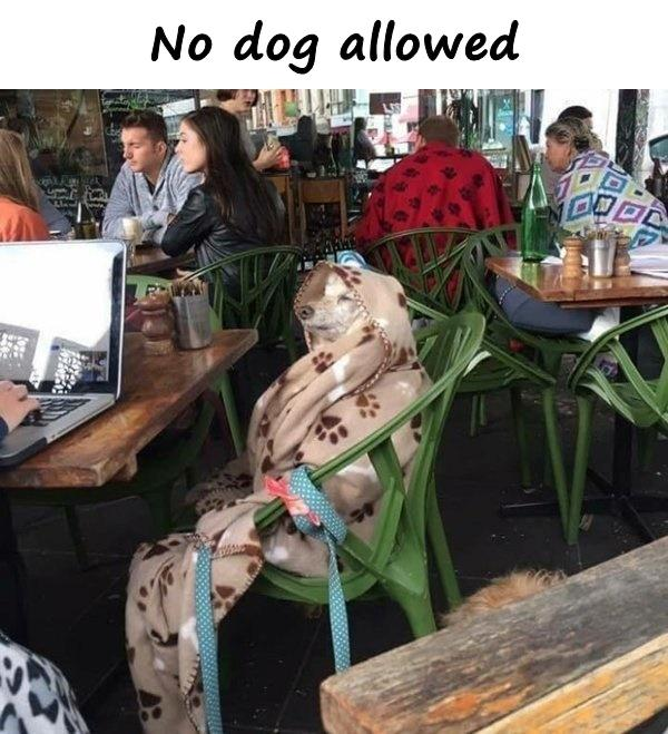 No dog allowed