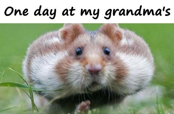 One day at my grandma's
