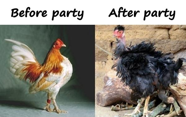 Party - alcohol