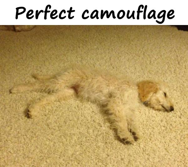 Perfect camouflage