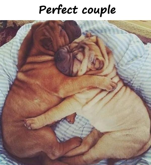 Perfect couple