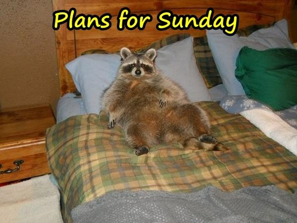 Plans for Sunday