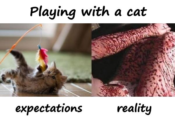 Playing with a cat