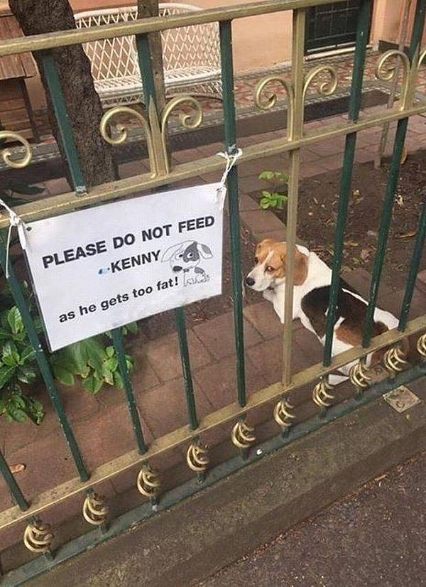Please do not feed Kenny