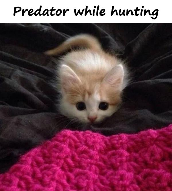 Predator while hunting