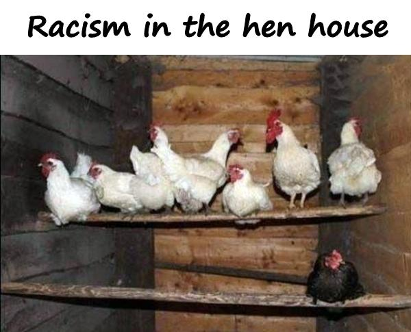Racism in the hen house