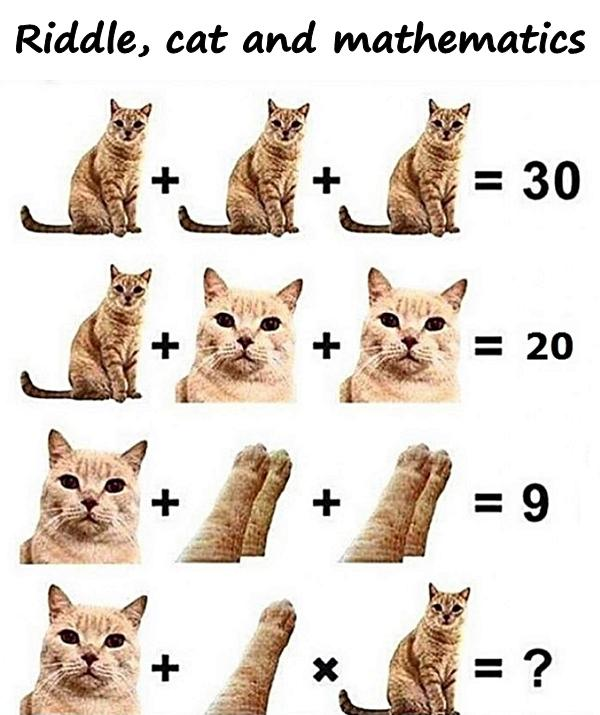Riddle, cat and mathematics
