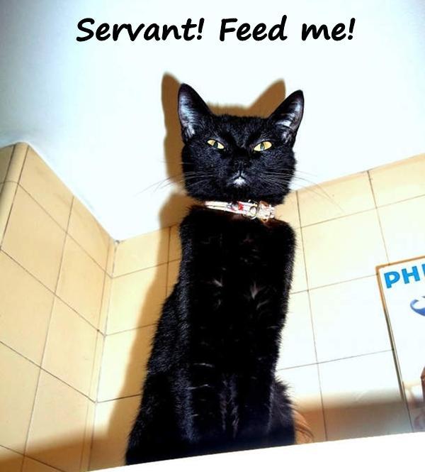 Servant! Feed me!