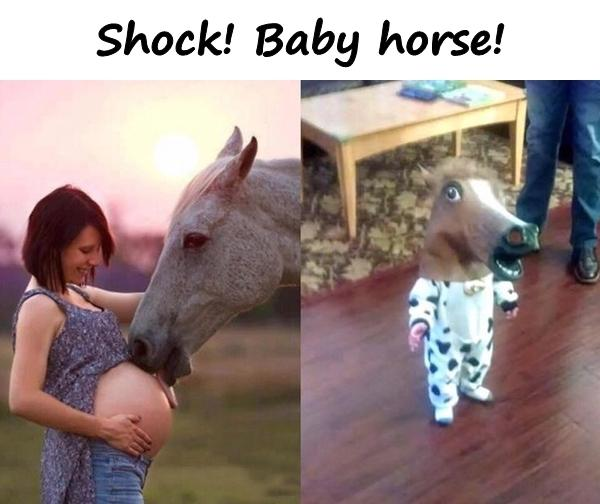 Shock! Baby horse!