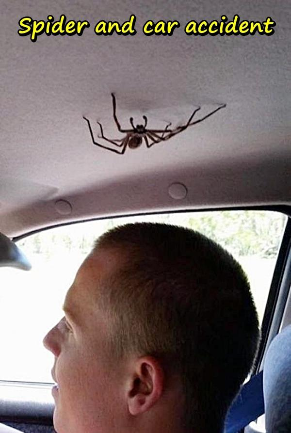Spider and car accident