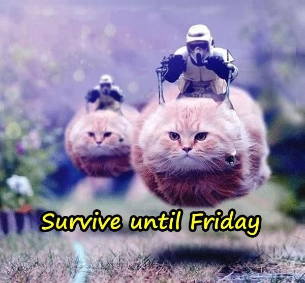 Survive until Friday