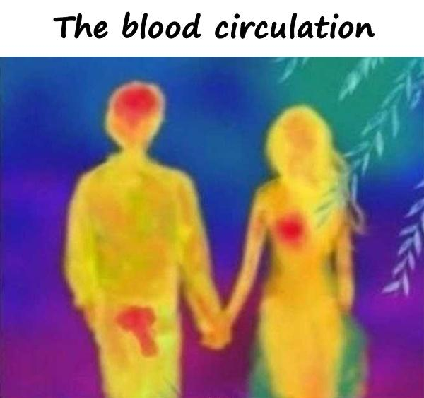 The blood circulation