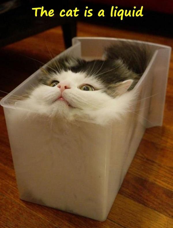 The cat is a liquid