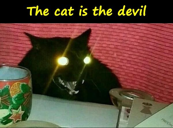 The cat is the devil