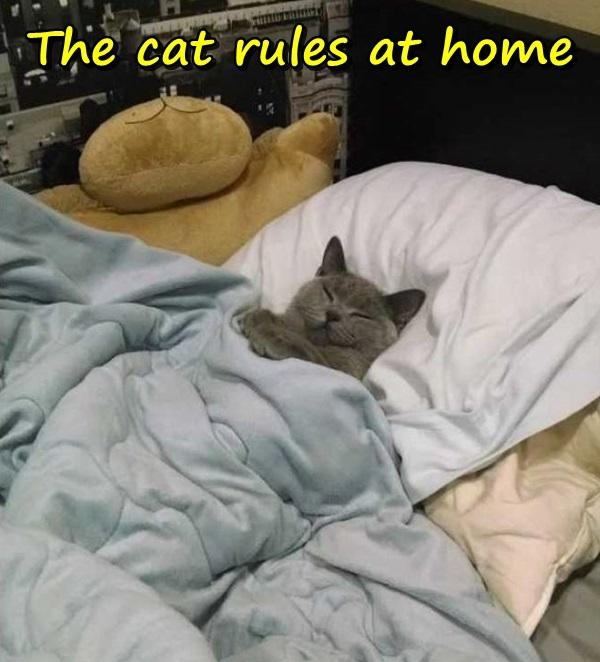 The cat rules at home