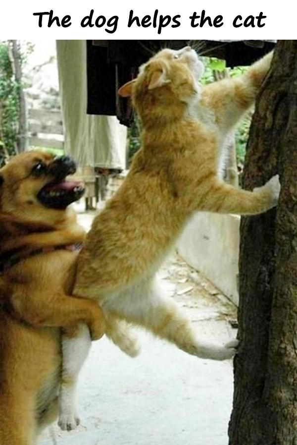 The dog helps the cat