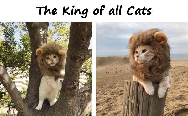 The King of all Cats!