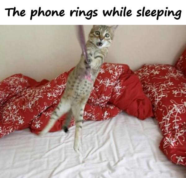 The phone rings while sleeping