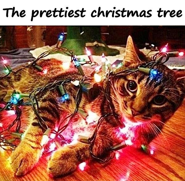 The prettiest christmas tree