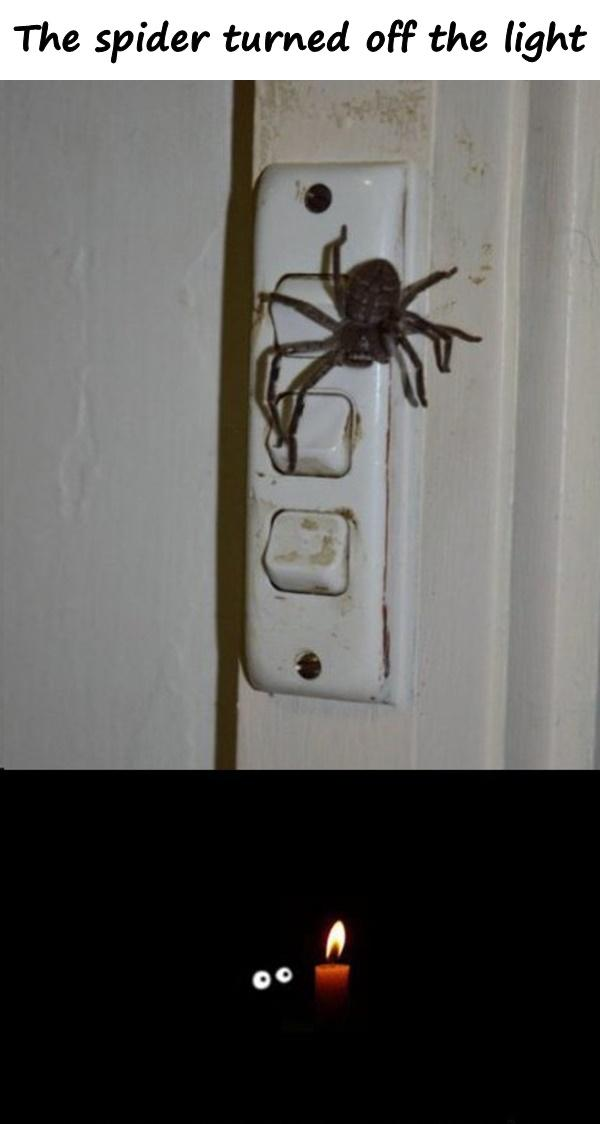 The spider turned off the light