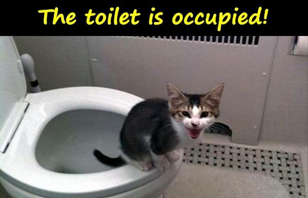 The toilet is occupied!