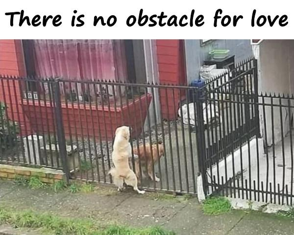 There is no obstacle for love