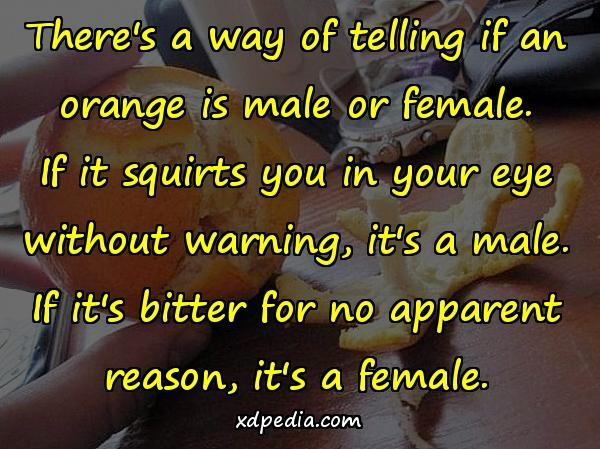 There's a way of telling if an orange is male or female. If it squirts you in your eye without warning, it's a male. If it's bitter for no apparent reason, it's a female.