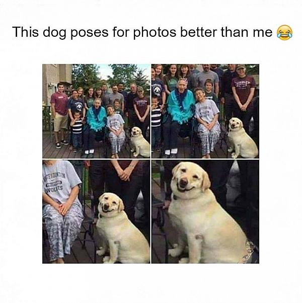 This dog poses for photos better than me