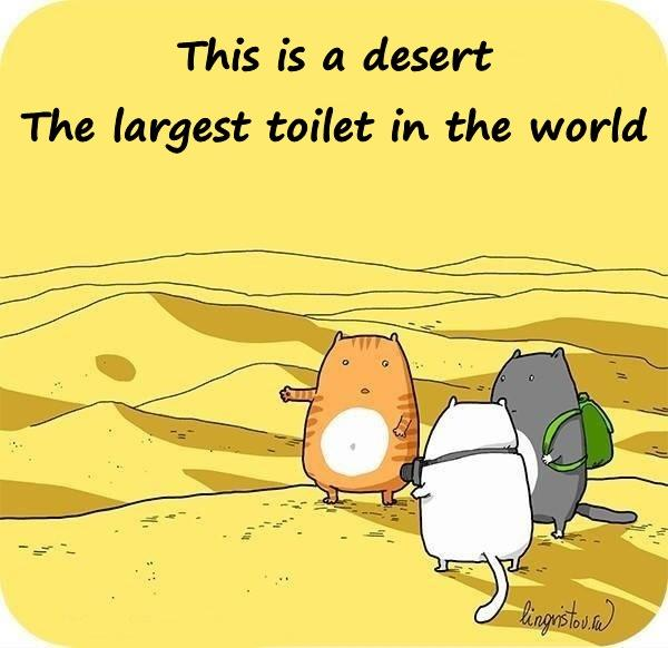 This is a desert. The largest toilet in the world.