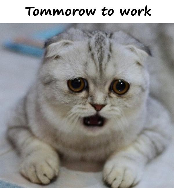 Tommorow to work